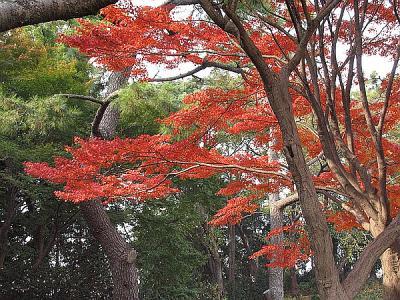 trees_japan.jpg