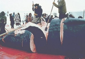 whaling_alaska_carving_whale_meat