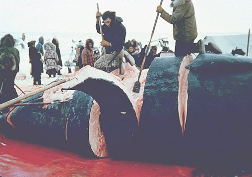 Japanese Appetite For Whale Meat Declining?