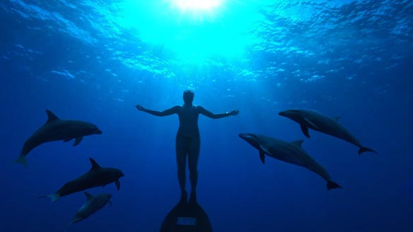 """Japan """"Dolphin Town"""" To Set Dolphins Free?"""