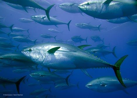 Japan Wins Bluefin Tuna Case