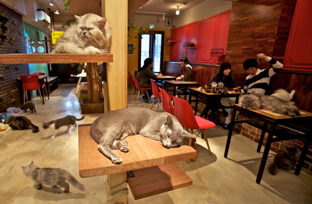 Cat-Cafe tokyo2