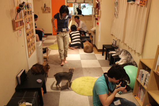 4 Top Cat Cafes in Tokyo