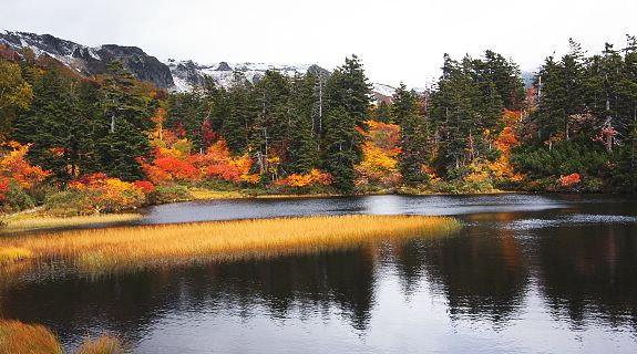 Discover Leaf Watching, Japan's Go-to Autumn Activity
