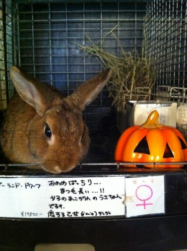 rabbit shop